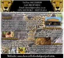 Daniell Cheetah Projects