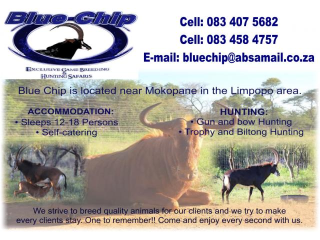 Blue Chip Hunting Safaris
